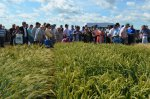 """New crops and plants. New genetics of winter wheat"" Field Day"